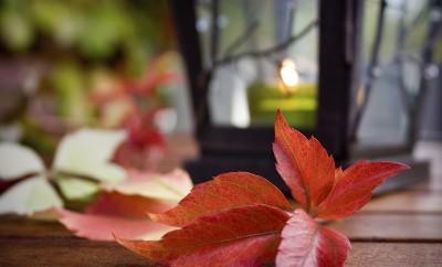 Sonbahar Işıkları