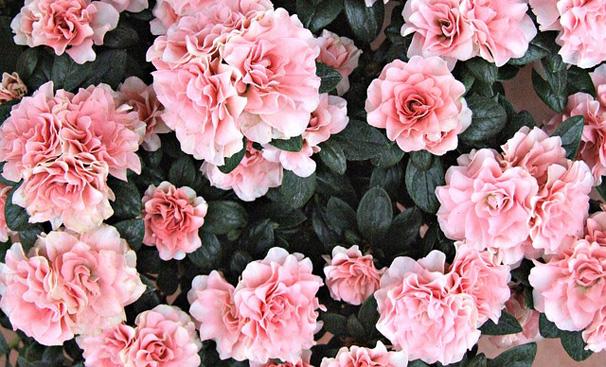 Çiçek Tohumu Nasıl Saklanır?