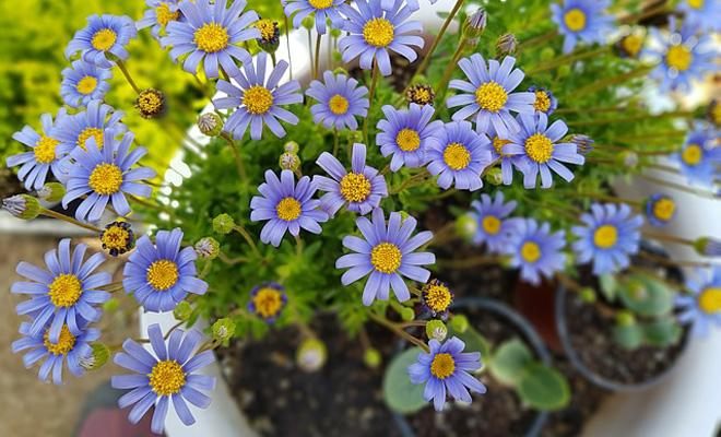 Çiçeklerde Saksı Değişimi