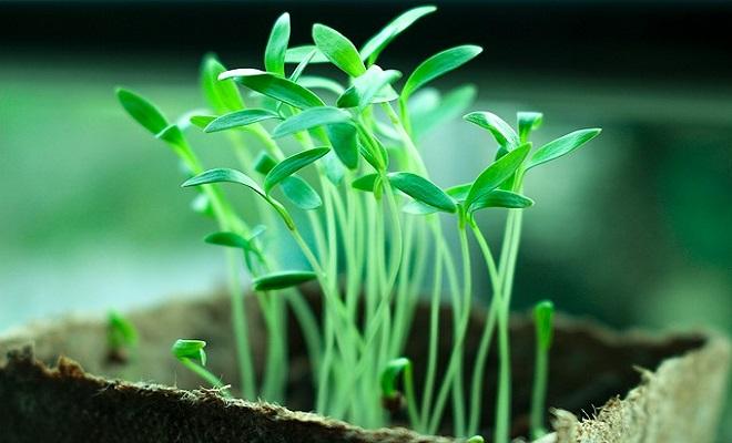 Gübre ve Tarım İlaçlarının Doğru Kullanımı