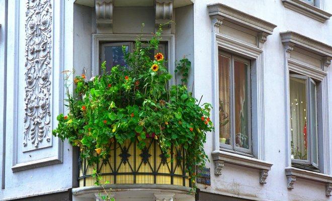 Salon ve balkon bitkilerinin çelikle üretimi