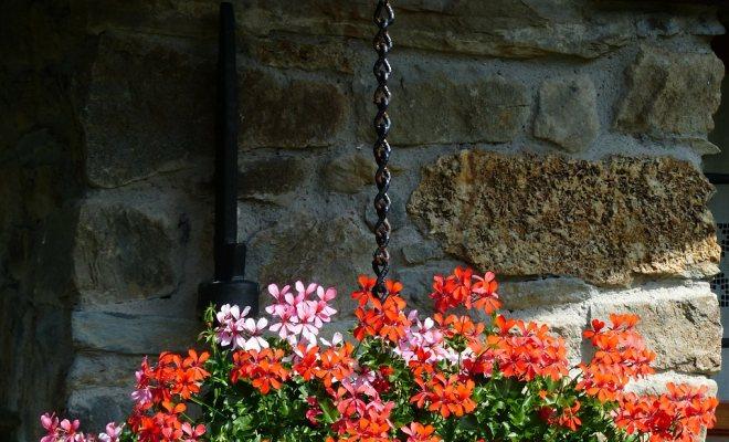 Merdivenlerde çiçek saksıları