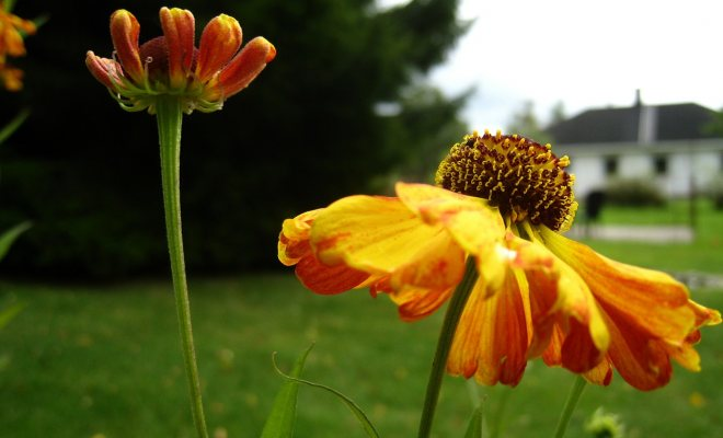 Bahçenizde ''sürdürebilirliği'' sağlayın
