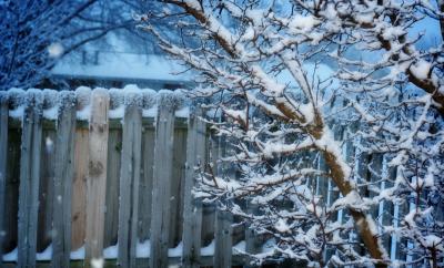kış bahçesi, kar ile kaplı ağaçlarlar ve arka planda bahçe çitleri