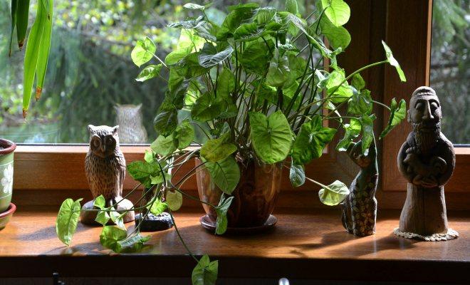 Bitkilerin sıcaklık isteği