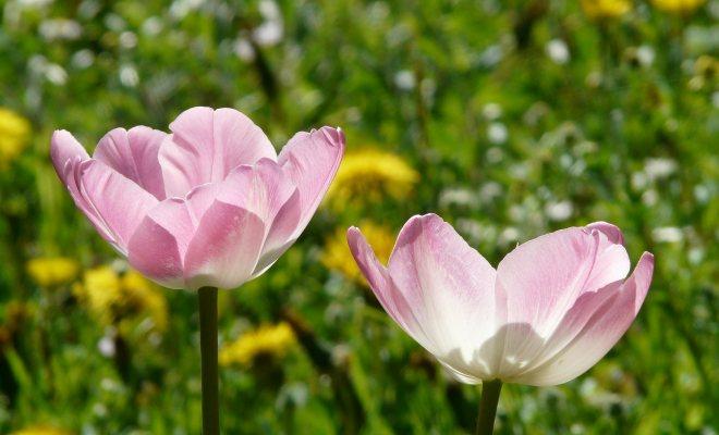 Evinizi ve bahçenizi çiçekler ile renklendirin