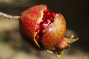 çatlamış nar meyvesi