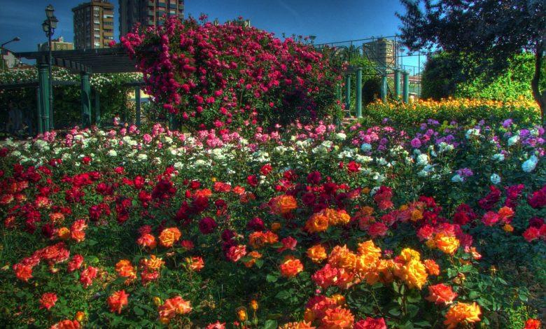 istanbulda park çiçekleri