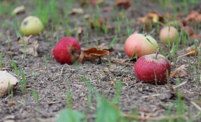 Bahçenizi kompost ile bahara hazırlayın