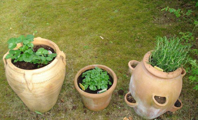 Soğanlı bitkilerin zamanı
