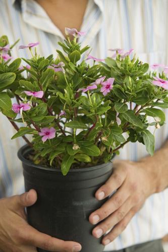 bitki-satin-alirken-dikkat-edilmesi-gerekenler-1