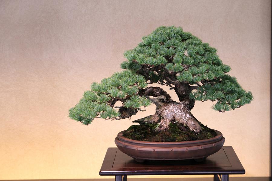 bonsai-bakimi-6