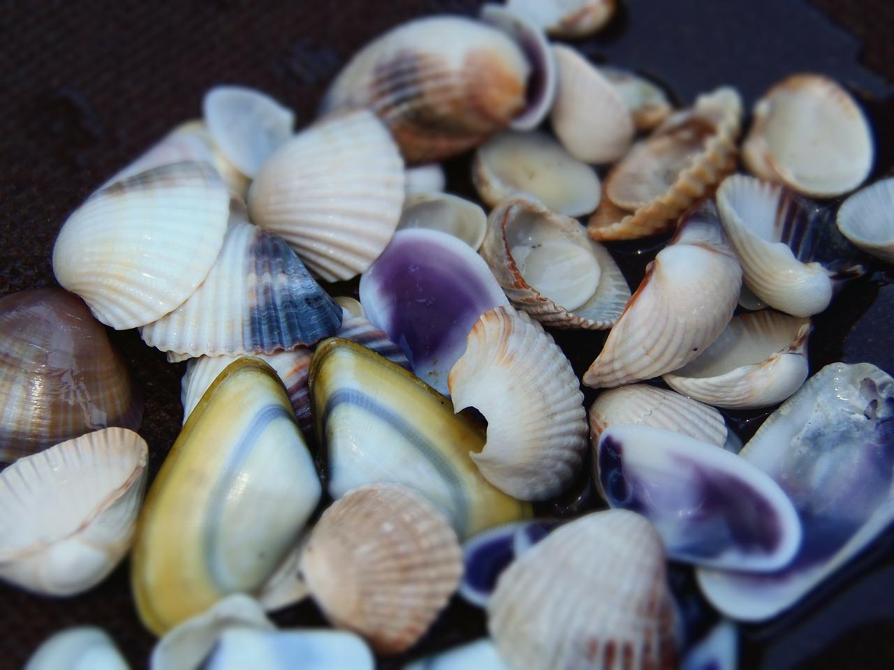 Deniz Kabuğu ile Saksı Süsleme
