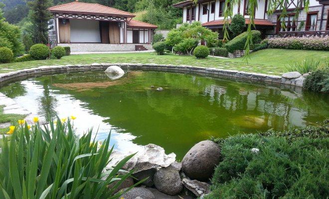 Doğal Yüzme Havuzu Nedir?