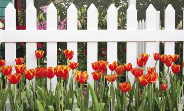 Beyaz Bahçe Çiti