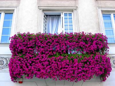 Fransız Balkon