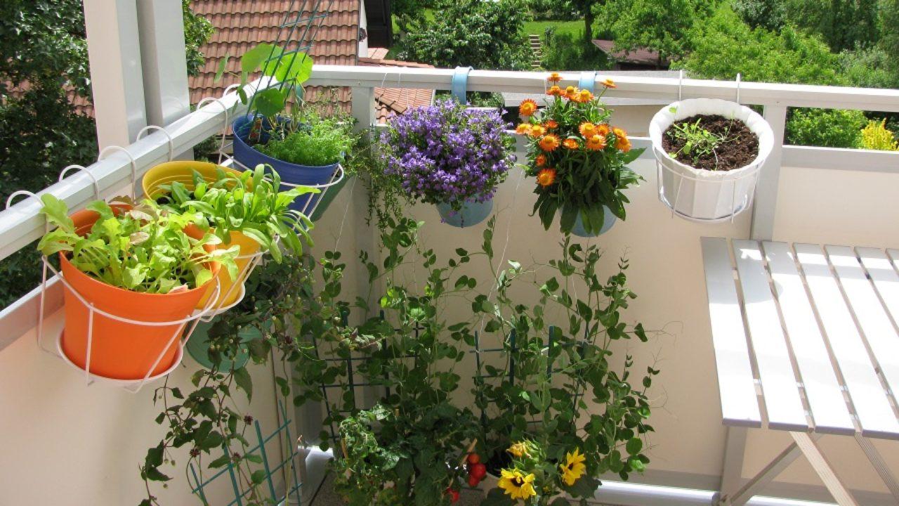 Balkonda Sebze Yetiştirme | EvHayat