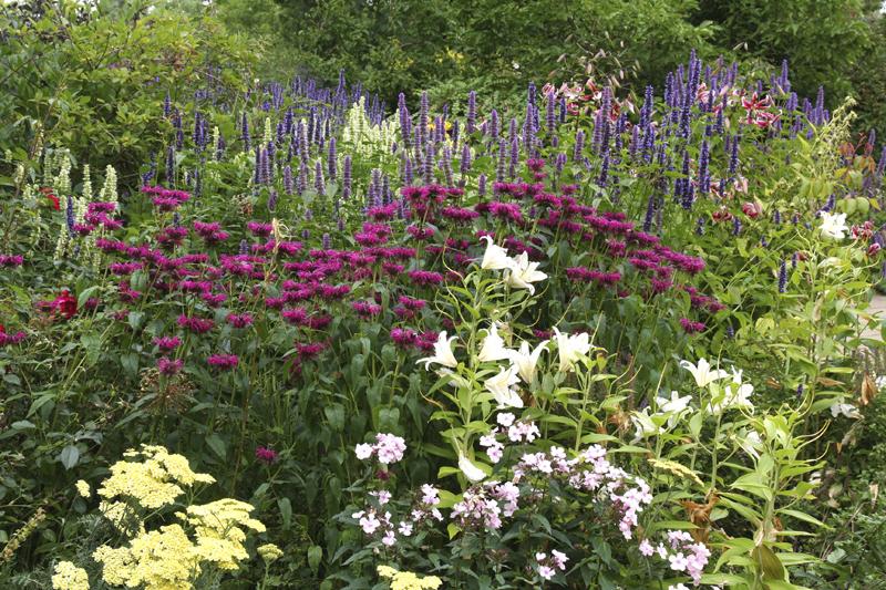İngiliz Bahçesinde Çiçekler