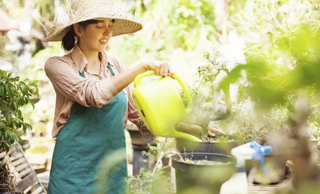Bahçe Bakımı ile ilgili İpuçları