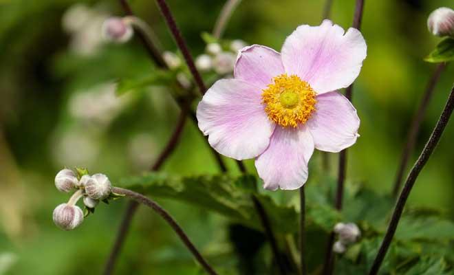 çiçek Nasıl Canlandırılır