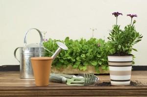 Sonbaharda Ekilebilecek Bitkiler