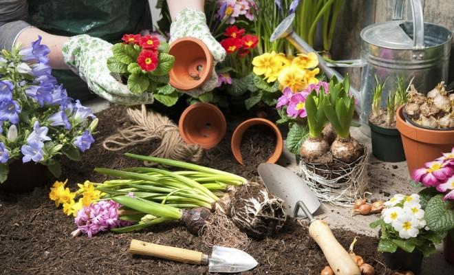 Bahçeye Bitki Transferi için İpuçları