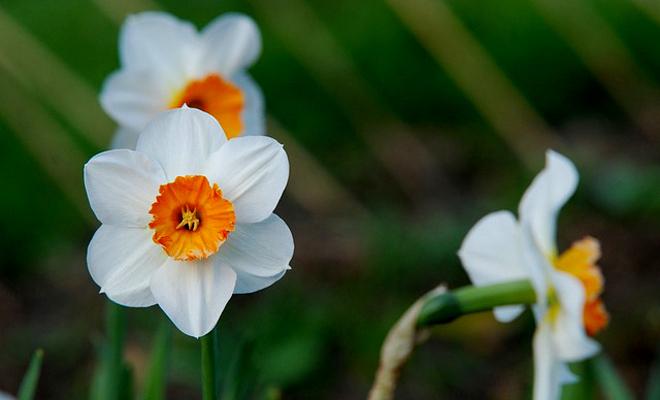Bahçenizi Kış Çiçekleri ile Renklendirin