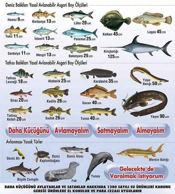 balık avlama tablosu