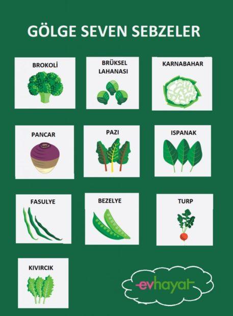 Gölge Seven Bitkiler