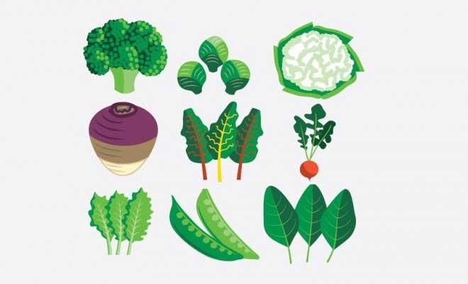 Gölgede Yetiştirilebilecek Sebzeler
