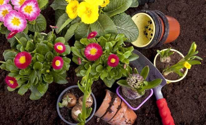 Bitkilerinizi Kışa Hazırlayın