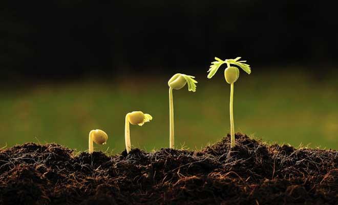 Bitkiler Tohumla Nasıl Çoğaltılır?
