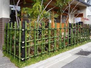 Bambu Çit-3