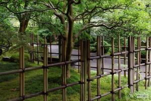Bambu Çit-4