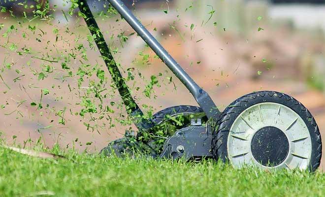 Ülkede çim ne olmalı