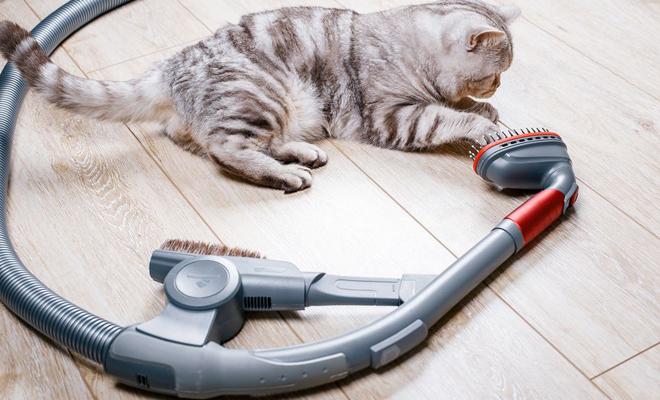 Evcil Hayvan Tüylerini Alabilen Elektrik Süpürgesi