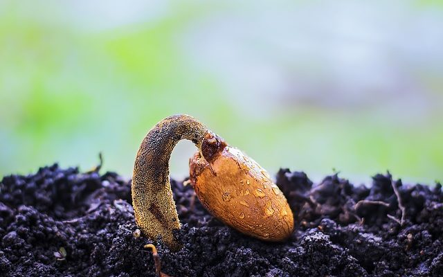 Yerli Tohum Nedir? Neden Önemlidir?