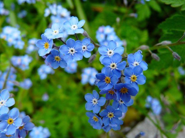 Unutma Beni Çiçeği