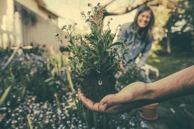 Bitki Sohbetleri