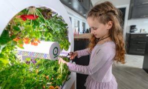 Evde Sebze Yetiştirmek