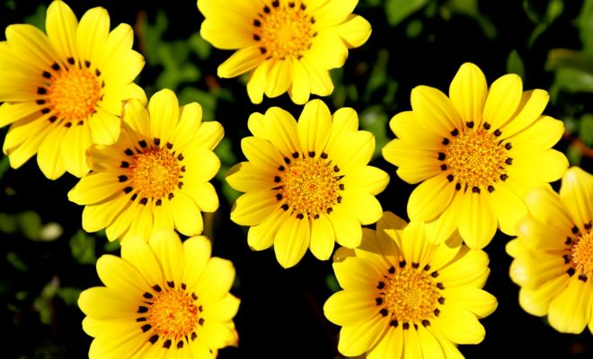 Sıcağa Dayanıklı Çiçekler