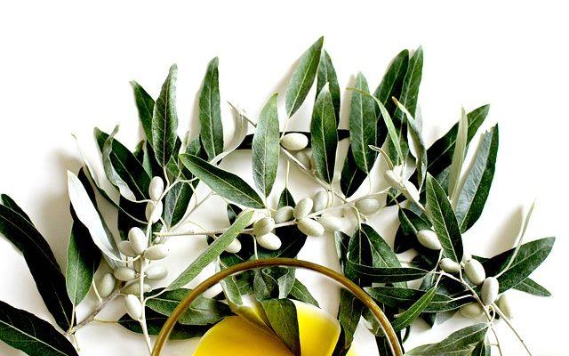 Zeytin Çeşitleri – Sofralık ve Yağlık Zeytin