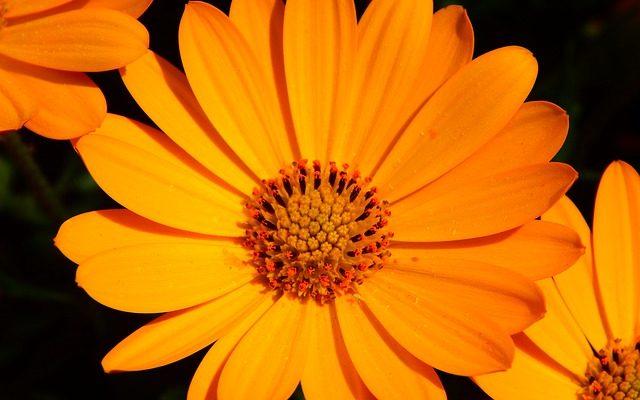 Portakal Nergisi Nasıl Yetiştirilir? – Aynısefa