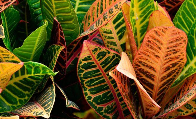 Ev bitkilerini soğuk havaya hazırlama
