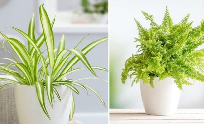 Nemi Seven Bitkiler Hangileridir?