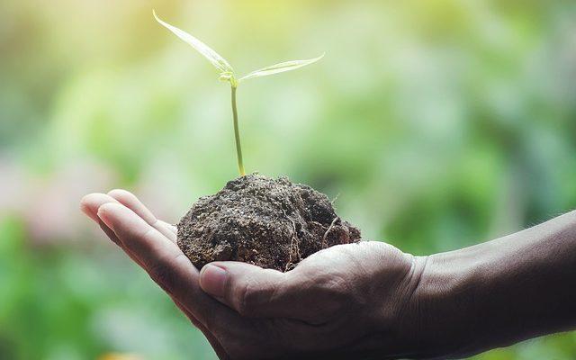 Tohum Nasıl Saklanır?